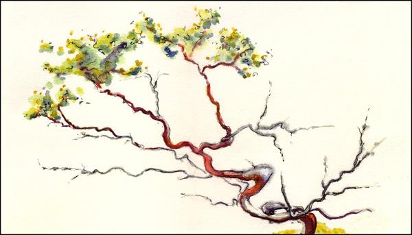 manzanita_tree_painting