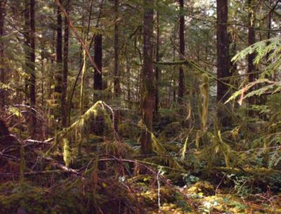 Cortes Island rainforest