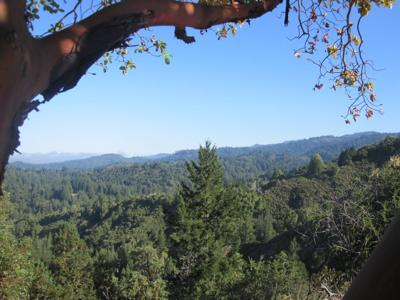 Madrone view